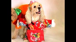 Chinese Dog Fashion - Video