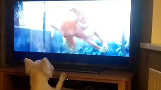 Westie obsessed with popular Christmas commercial - Video