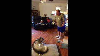 Man and husky argue over stolen potato skin - Video