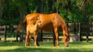 Ocala: The Horse Capital of the World - Video
