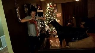 Doberman extremely excited to open Christmas stocking - Video
