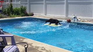 Dog maintains perfect balance despite massive cannonball
