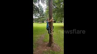 UK Tree climbing FAIL - Video