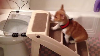 Potty trained puppy uses the toilet - Video