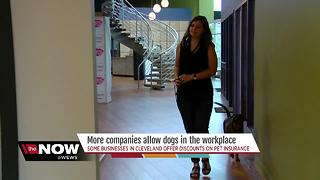 Pets in the Workplace - Video