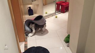 Think this French Bulldog is excited about his new bed? - Video