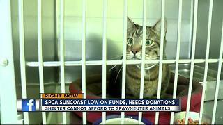 SPCA Suncoast out of money, threatening to close - Video