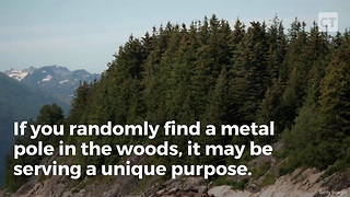 If You Find A Metal Pole In The Woods, Here's The Secret It's Guarding - Video