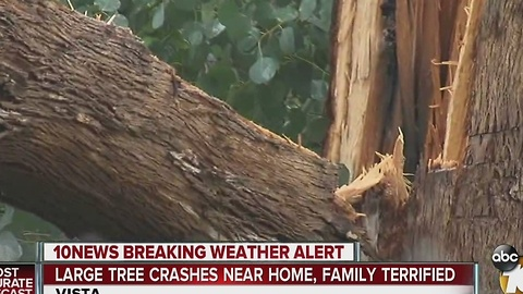 Strong wind sends tree crashing down in Vista yard, narrowly missing home