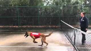 German Shepherd Jumps Straight Into Net - Video