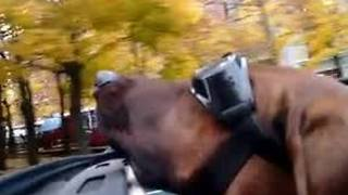 Dog enjoys ride during warm Buffalo November - Video