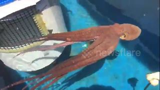 Octopus shoots woman with jet of water - Video