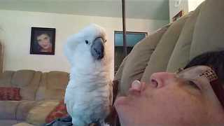 Cockatoo Sulks When Owner Blows Bubble in His Face - Video