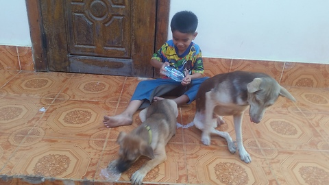 Boy play with two dog