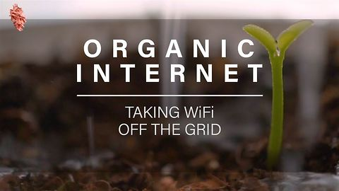 Plant Box Supplies Phones With Organic WiFi