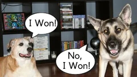 Cutest Dog Couple Argument (Comment Who Is The Winner)