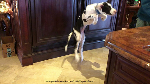 Puppy bounces in excitement for his breakfast