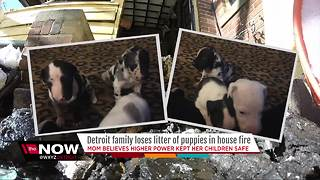 Detroit family loses litter of puppies in house fire - Video
