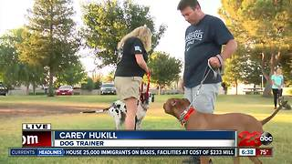 Local dog group helping owners with basic commands - Video