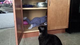 Hilarious Adventures Of A Baby And A Cat - Video
