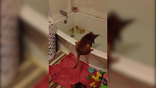 """A Cute Pup Makes Friends with Several Duckling Ducks in A Bathtub"""