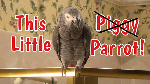 Parrot puts new spin on a children's nursery rhyme