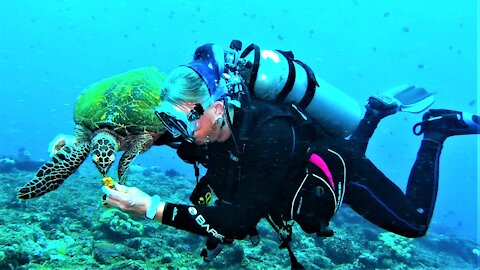 Scuba diver is in heaven to have this sea turtle literally eating out of her hand