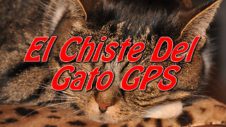 El Chiste Del Gato GPS - Video