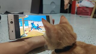 Kitten obsessed with watching 'Tom & Jerry' all day long