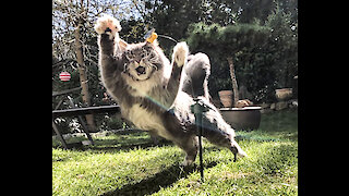 Cat vs Bee - knockout in 1st round