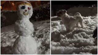 Dogs protect their house from a major threat: a snowman!