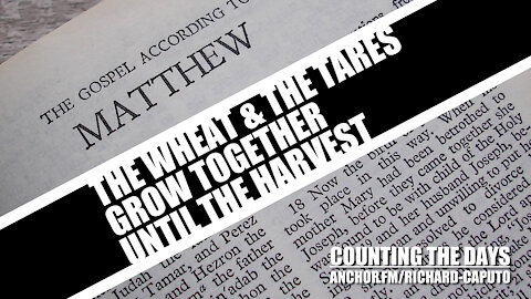 The Wheat & The Tares Grow Together Until The Harvest