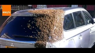 Hundreds of Bees Swarm Car in UK - Video