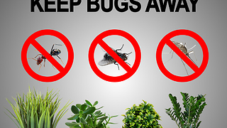 Plants that help keep bugs away - Video