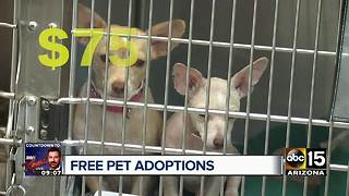 Get FREE pet adoptions at MCACC Saturday