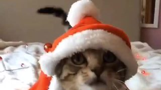 Cat gets into holiday spirit with Santa outfit - Video