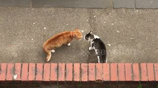 Cats have epic showdown on street - Video
