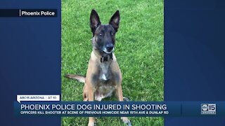 Phoenix police dog injured in shooting
