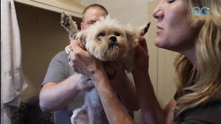 A Dogs Journey Home - Dog Rescuers (Ep1)