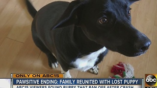Reunited! A family was overjoyed when their lost puppy was returned after a crash in Flagstaff recently - Video