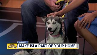 July 23 Rescues in Action: Isla needs a forever home - Video