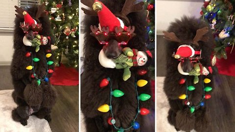 Pooch poses perfectly in festive video
