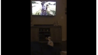 Dog fascinated by canine in video game - Video