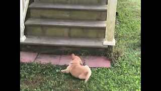 Adorable Puppy Takes a Tumble