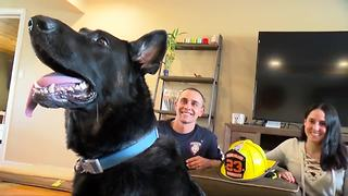 Firefighter adopts dog after 911 call - Video