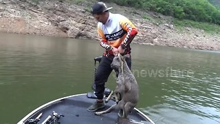 Thai fisherman rescues stranded goral that was fleeing wild dogs