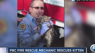 PBC Fire Rescue mechanic rescues kitten - Video