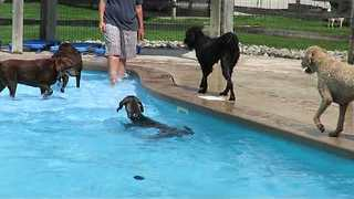 Pups Cool Down at Doggy Daycare With Paddle in Pool - Video