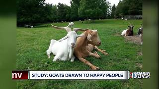 Smiling people make goats happy.