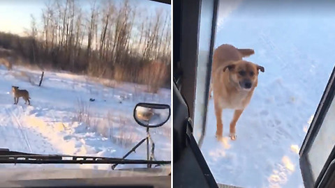 Dog Waits For The School Bus Everyday For A Beautiful Reason